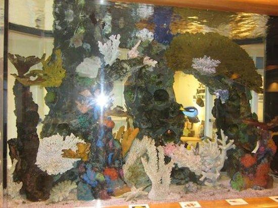 aquarium tafel fort lauderdale  u2013 msnoel com