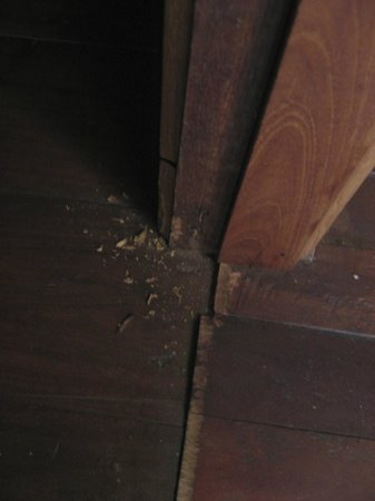 Shwe Inn Tha Floating Resort : where the rats entered our room by gnawing through the door