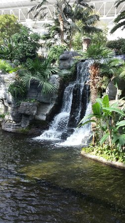 Gaylord Opryland Resort & Convention Center : beautiful inside of resort