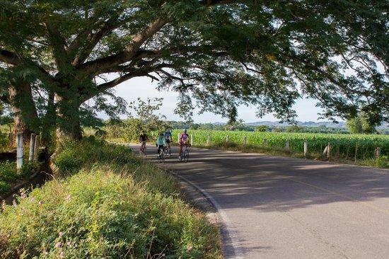 Bici Bucerias: Farmland