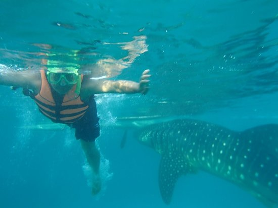 Malonzo Pension House: swimming with the whale sharks