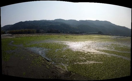 Okoshiki Beach: この日の、御輿来海岸