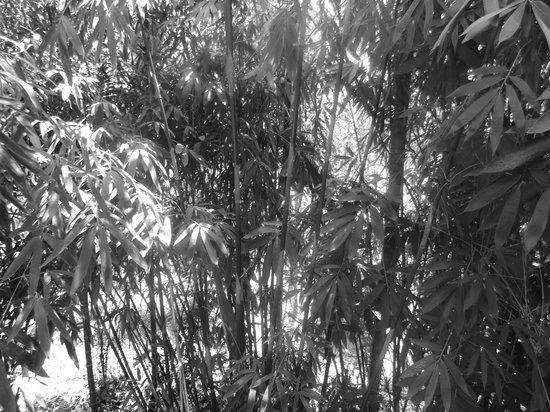 Wayanad Blooms: room view