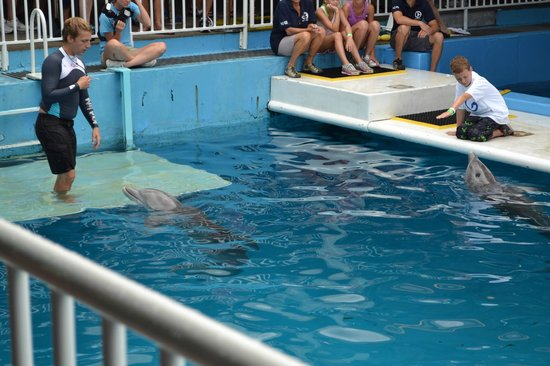 So Fun Picture Of Clearwater Marine Aquarium
