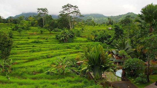 Abian Ayu Villa: sidemen view from abian ayu