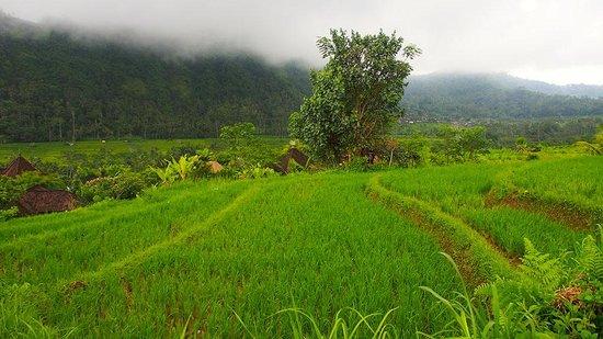Abian Ayu Villa: sidemen view from abian 2