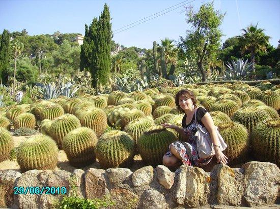 Jardin Santa Clotilde : Опять эти колючие кактусы
