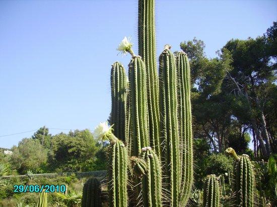 Jardin Santa Clotilde : Огромное число кактусов