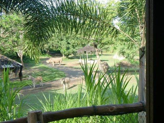 Mara River Safari Lodge: お部屋からの眺め
