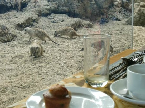 Mara River Safari Lodge: レストランからの眺め