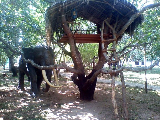 Hotel Elephant Reach: In garden of the hotel