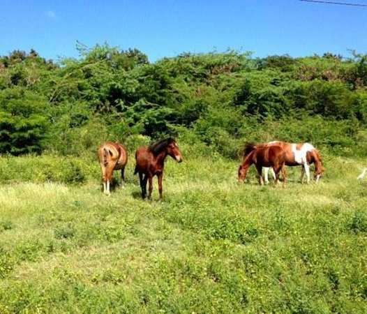 Hector's by the Sea : Horses