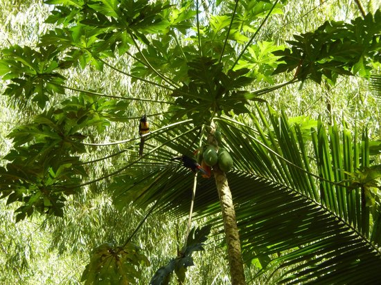Samasati Retreat & Rainforest Sanctuary: Birds