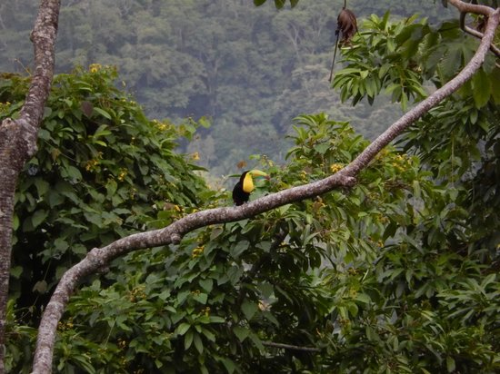 Samasati Retreat & Rainforest Sanctuary: Toucan