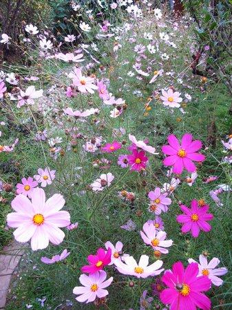 The Bruce Chalet: Garden