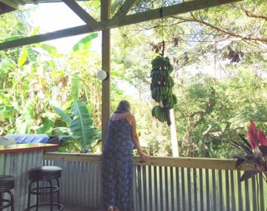 Tin Box: In the treehouse
