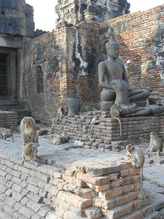 Phra Prang Sam Yot : Храм-их дом!