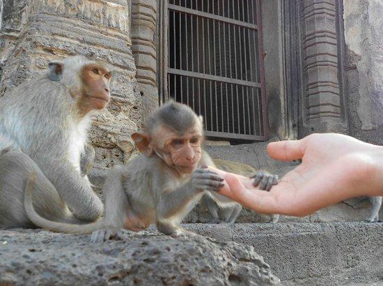 Phra Prang Sam Yot : Маленькие очень любознательные)))