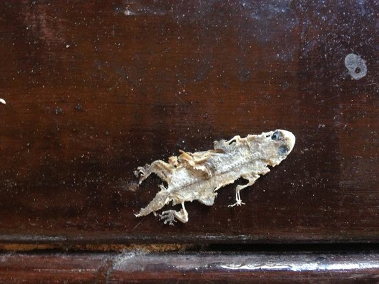 Railay Bay Resort & Spa : Squashed frog on veranda for 6 days removed on 7th when leaving
