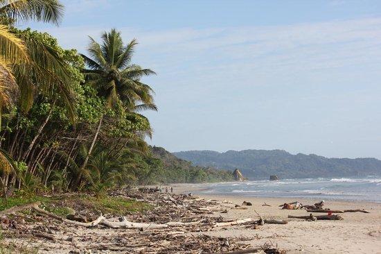 El Rey Patricio : Playa Hermosa- Close to the hotel!