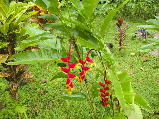 Kungkungan Bay Resort: Beautiful grounds