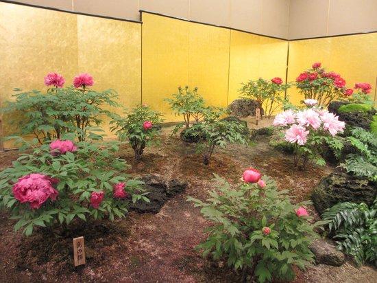 Yuushien Garden: 牡丹(屋内)