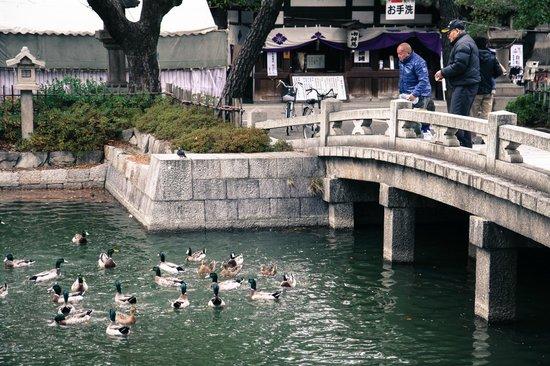 Sumiyoshi Taisha Shrine : Feeding the ducks