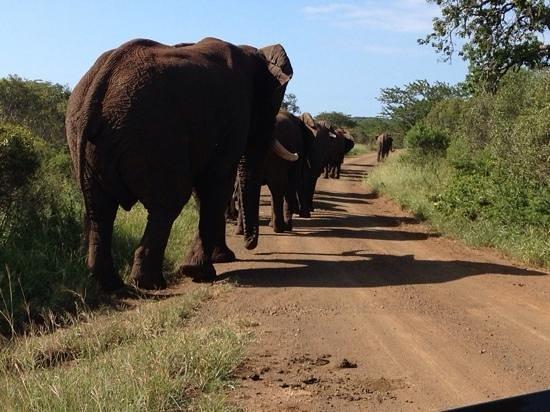 Thanda Safari Lodge: elephants at Thanda