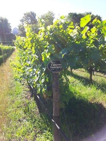 MolenVliet Oosthuizen Family Vineyards : eigen wijnvelden