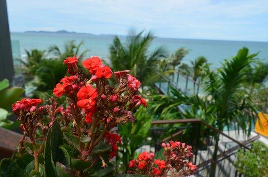 Cape Dara Resort: Отцвели уж давно - скоро вновь зацветут
