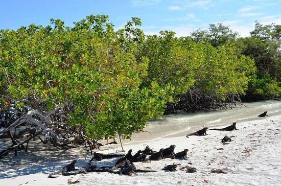 Galapagos Beach at Tortuga Bay: Playa Tortuga Bay