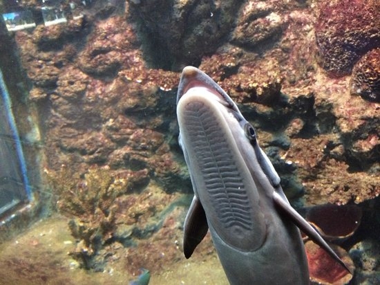 Phuket Aquarium : fish