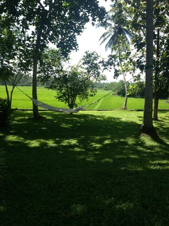 Maya: View of the paddy fields from the hammock