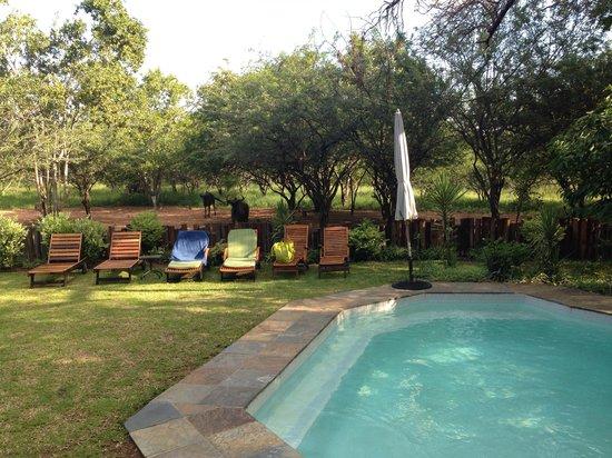 Needles Lodge: Sonnenbad mir Besuchern