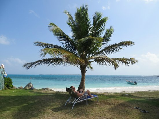 Dutchman's Bay Cottages: Relax under the palm