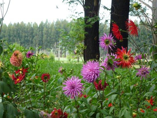Rainbow Lodge: Flowers everywhere you look!