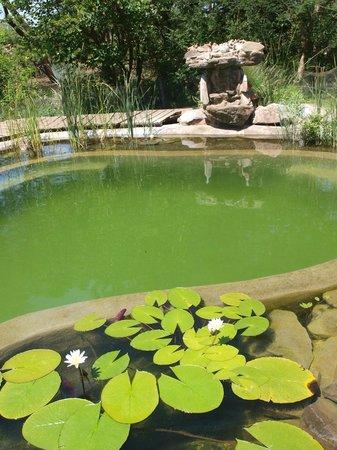 Munga Eco-Lodge : Eco-pool