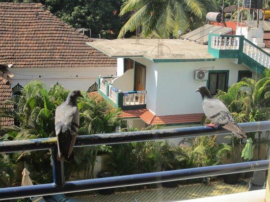 Lambana Resort : Our feathered friends.