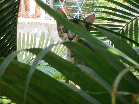 Lambana Resort : Next door's kitten.