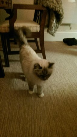 Hotel Penzance: Jerry - The hotel cat!