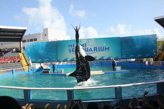 Miami Seaquarium: seaquarium
