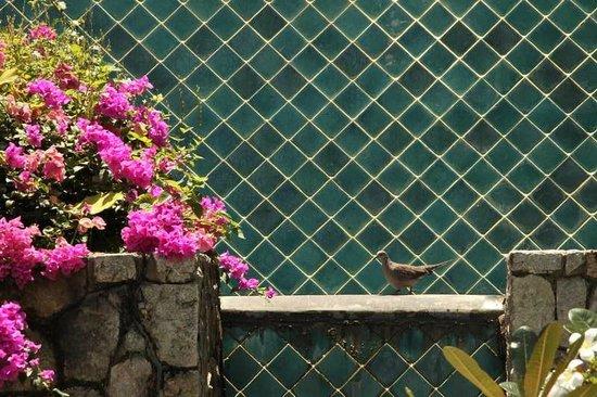 Patong Cottage Resort: наслаждение водой