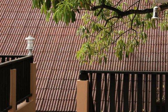 Patong Cottage Resort: медитация