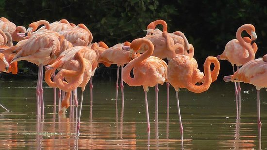 Flamingo Tours: Standing on one leg