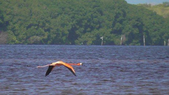 Flamingo Tours: in flight