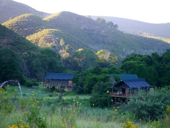 Botlierskop Private Game Reserve: Tented safari lodges