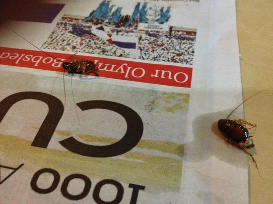 The Ritz Village Hotel: Two cockroaches from our 2nd room (803)