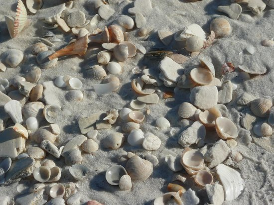 Holiday Inn Express Pensacola Beach: Good place to find seashells