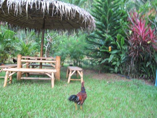 garden chicken fun