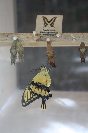 Fairchild Tropical Botanic Garden : in the special butterfly garden
